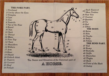 The Horse Tea Towel - TTSPS94