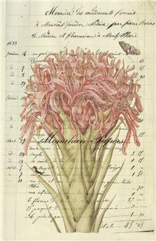 Botanical 37 - BOT37