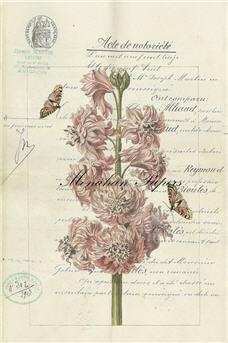 Botanical 39 - BOT39