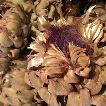 Artichokes - Large Bloom