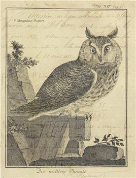 Isaac Owl - SPS706