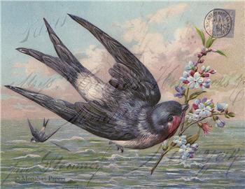 Floral Vine & Bird - SPS988