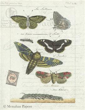 Butterflies - X321