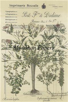 Botanical 14 - BOT14