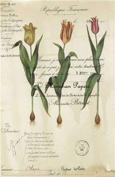 Botanical 2 - BOT2