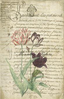 Botanical 32 - BOT32