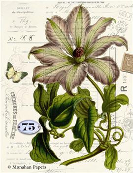 Botanical 72 - BOT72