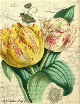 Botanical 76 - BOT76