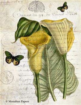 Botanical 77 - BOT77