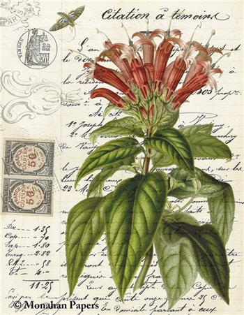 Botanical 78 - BOT78