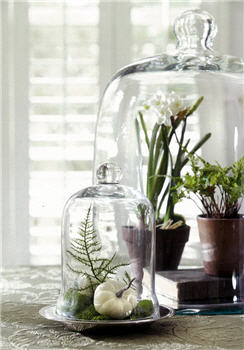 English Bell Jar - Cloche - Assorted