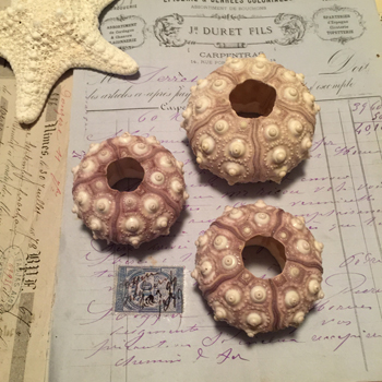 Sea Urchins - Set of 3