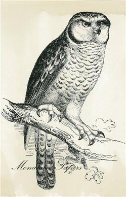 Owl - SPS361