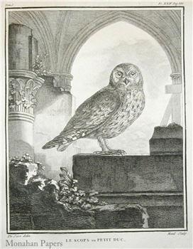 Le Scops Owl - SPS362