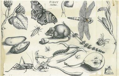 Mouse Botanical - SPS462