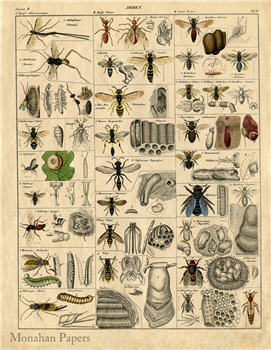 Insects - SPS645