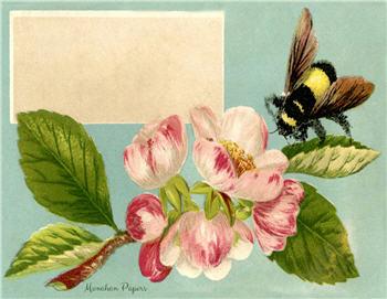 Magnolia Bee - SPS921