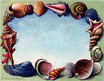 Shells Frame - SPS961