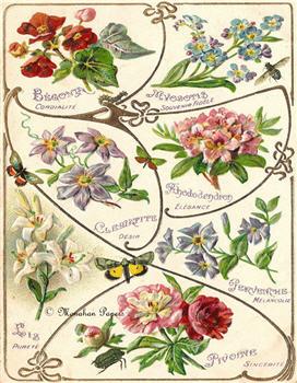 Assorted Florals - X295