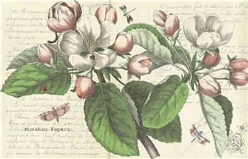 Magnolia Floral - X310