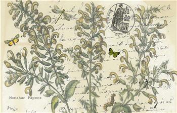Boxwood Floral - X311