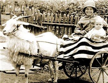 Americana Goat Cart - X36