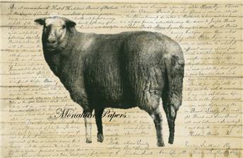 Sheep A - SPS252