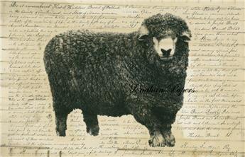 Sheep B - SPS253