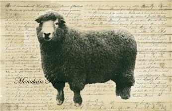 Sheep C - SPS254