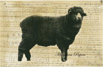 Sheep D - SPS255