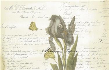 Botanical 31 - BOT31