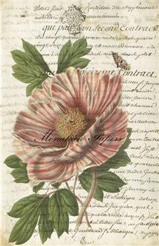 Botanical 33 - BOT33