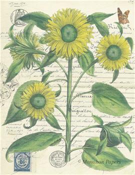Botanical 56 - BOT56