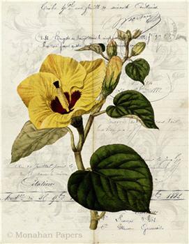 Botanical 86 - BOT86