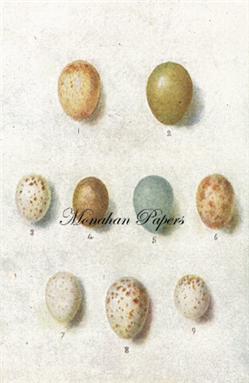 Egg Plate - E13