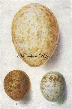 Egg Plate - E15