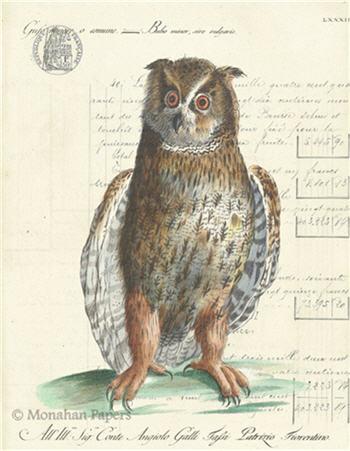 The Barn Owl - H26