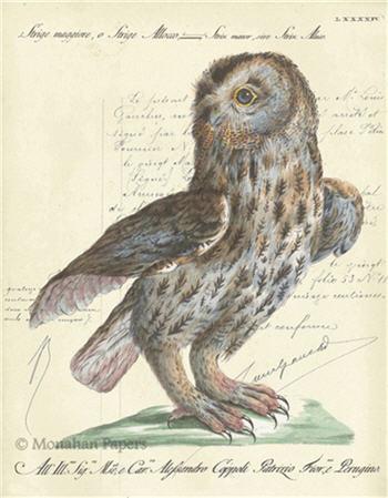 Meadow Owl - H8