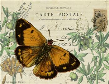 Orange Butterfly - SPS1435