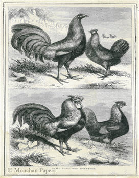 Game Fowls and Dorkings - SPS148