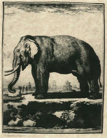 The Elephant - SPS31