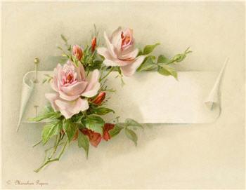 Budding Pink Roses - SPS915