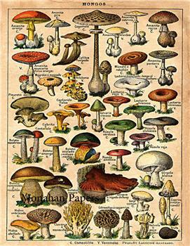 Hongos - Mushrooms - X176