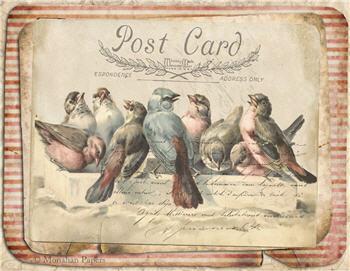 Red Stripe Bird Gathering - X270