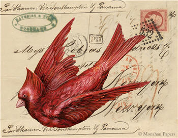 The Red Cardinal - X337