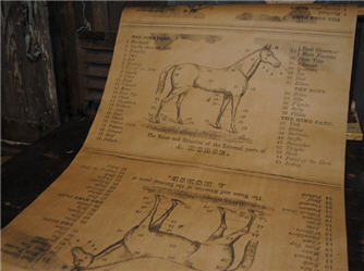A Horse Wrapping Paper