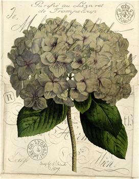 Botanical 118 - BOT118