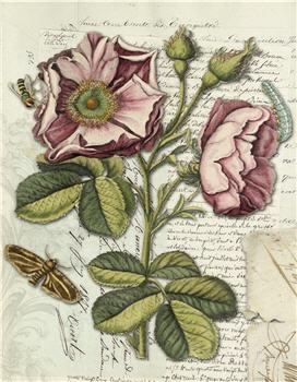 Botanical 119 - BOT119
