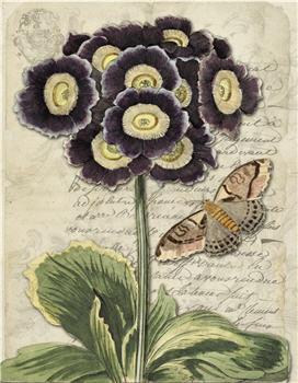 Botanical 120 - BOT120