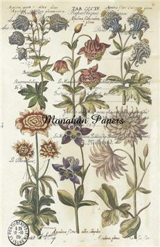 Botanical 1 - BOT1